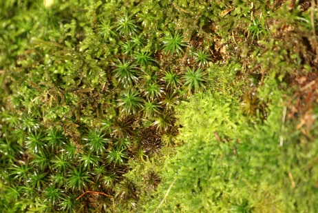 Mixed mosses