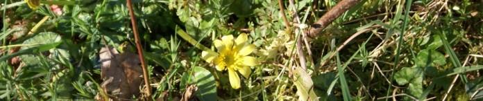 cropped-017-renunculus-crop.jpg