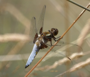 Cheating -- a blue chaser from August last year!