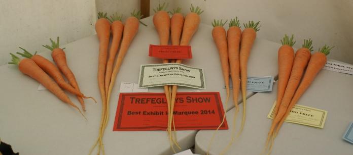 Carrot combat.