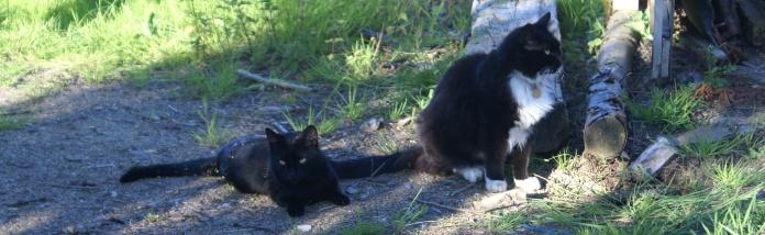 Guilty cats.