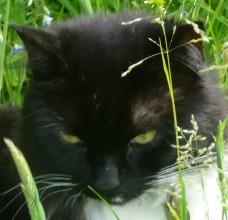 Wistful in bright sunlight - pupils narrow vertical slits