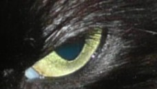 Partially dilated pupil