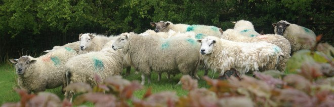 Tups in the rain