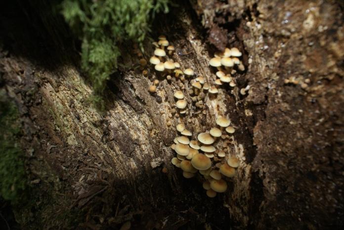 Oak Woodland fungi