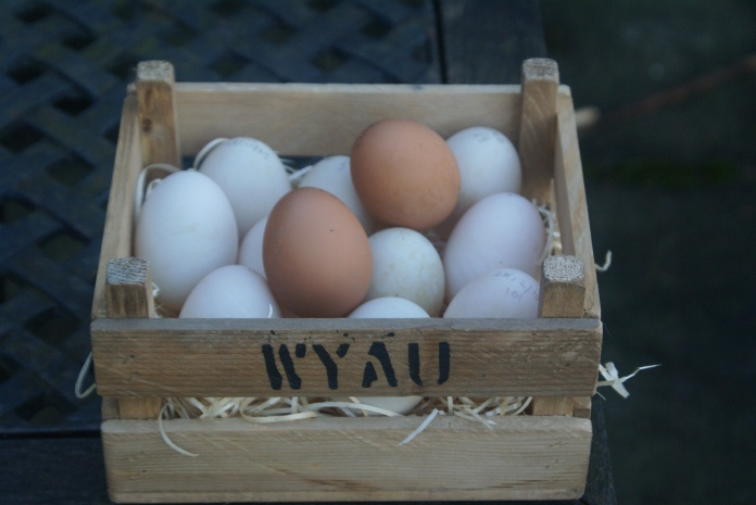 Welsh Eggs