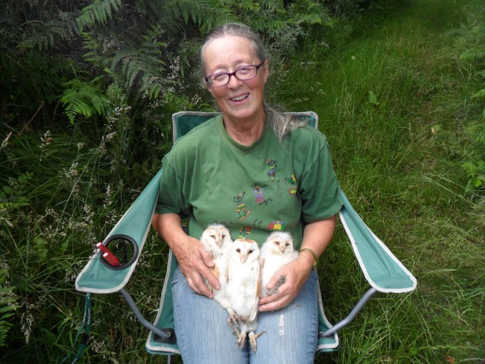 Baby barn owls and Jan